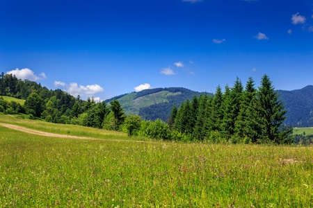 large meadow with pine trees on the hill in front of a mountain