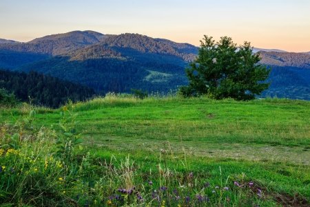 wild herbs and a tree on a green meadow in mountains