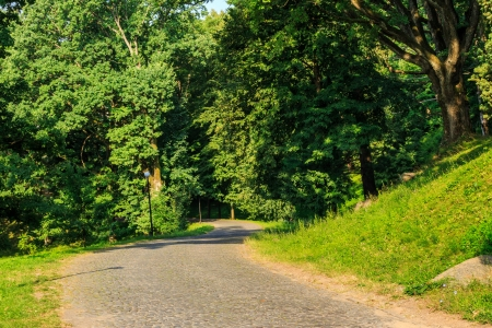 paved path winding among the trees in a city park horizontal