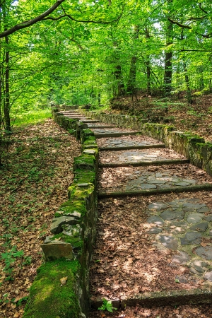 winding path with steps made of stone among the trees in a city park is covered with foliage vertical Stock Photo