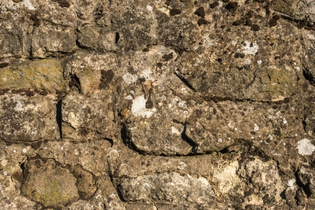 texture of the old masonry with a dried moss and stains