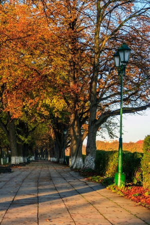alley under the trees turned yellow on morning fall Stock Photo