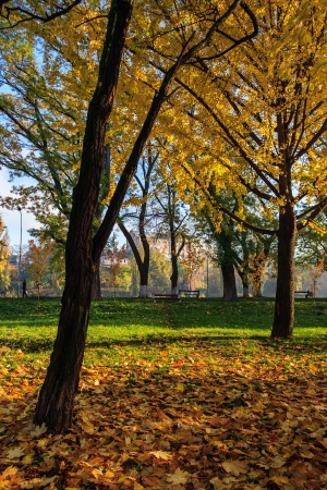 in autumn yellow leaves fall on the green grass in a public park on the waterfront