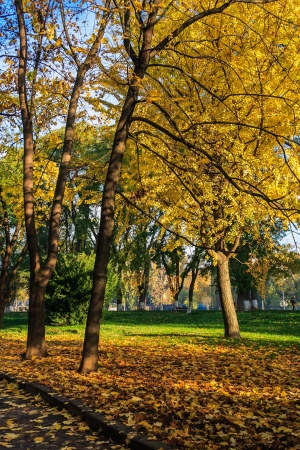 in autumn yellow leaves fall on the green grass near the road to public park on the waterfront Stock Photo