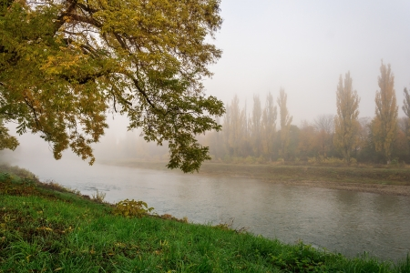 yellowing tree on the green banks of the river in a fog photo