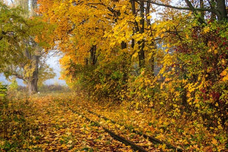 abandoned railroad in the woods littered with yellow autumn leaves. horyzontal Stock Photo