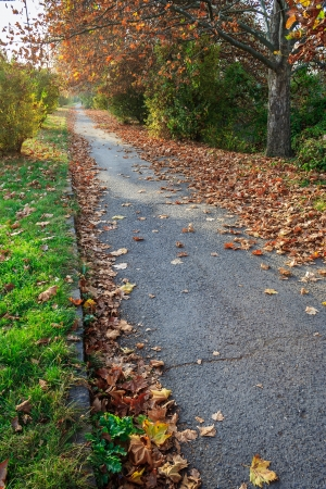 path along the green lawn and trees strewn with withered leaves in early autumn Stock Photo