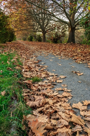low angel path along the green lawn and trees strewn with withered leaves in early autumn
