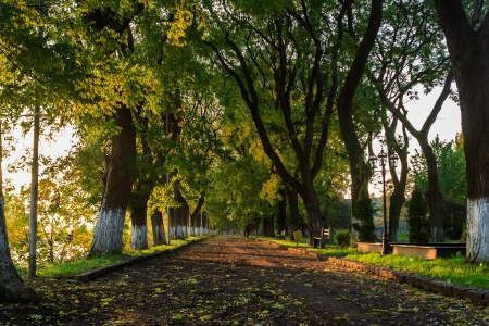 the shadow of the trees fall to the mall in the morning of early autumn Stock Photo