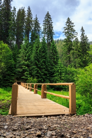 new wooden bridge leading from the unpaved road to a dense coniferous forest. vertical