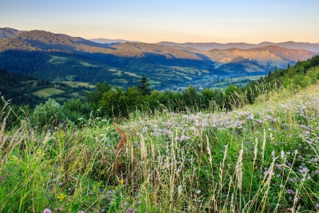 wild meadow in front of a forest on the hillside Stock Photo