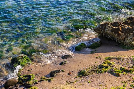 sea waves take out seaweed on rocky sandy beach