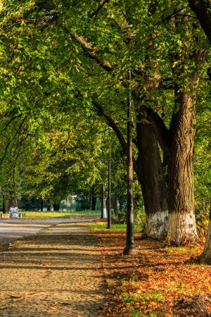 walking alley early autumn. trees with green foliage. early in the morning Stock Photo