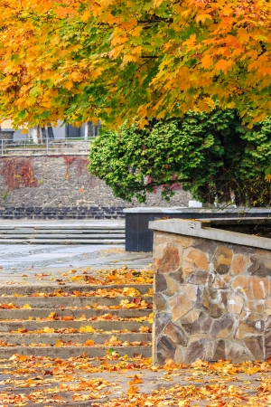 steps under a tree in the town square covered with foliage