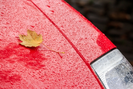 yellow leaf on the wet hood of a red car Stock Photo