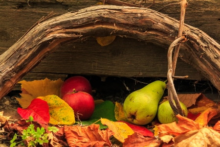 autumnal fruit still life with apples and pears in foliage  on board and vines background