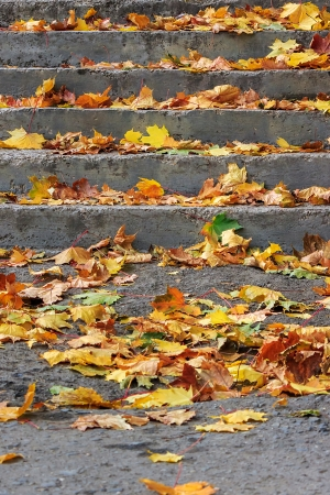 steps under a tree in the town square covered with foliage photo