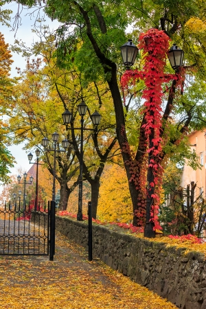 urban landscape. street of the old town is wet after rain, with yellow foliage, red ivy and street lamps