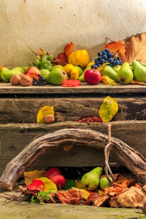 autumnal fruit still life with apples, pears, grapes, nuts in foliage  on board and vines background Stock Photo