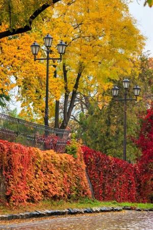 urban landscape. street lights under the yellow crowns of autumn trees near a metal fence on the street wet from rain