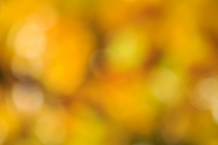 abstract, blurry, yellowed foliage background in day time Stock Photo