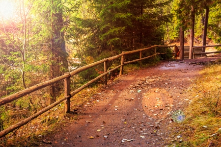 autumn landscape. footpath in the coniferous forest Stock Photo