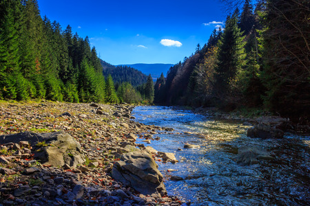 autumn landscape. rocky shore of the river that flows near the pine forest at the foot of the mountain. photo