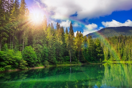 view on lake near the pine forest early in the morning on mountain background