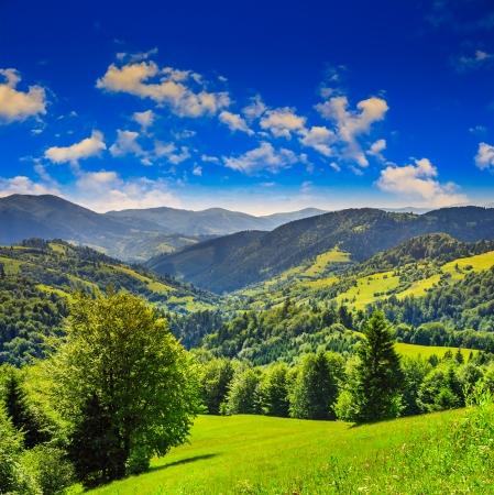 Forêt de conifères sur une pente raide de montagne Banque d'images - 24177145