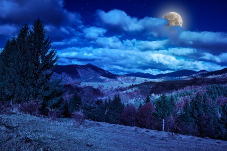 pine trees near valley in mountains and autumn forest on hillside under blue sky with clouds at night