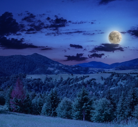 coniferous forest on a steep mountain slope at midnight