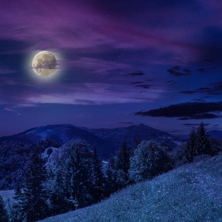 夜に険しい山の斜面上における針葉樹林 写真素材