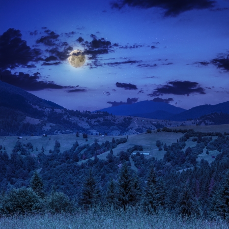coniferous forest on a far steep mountain slope at night