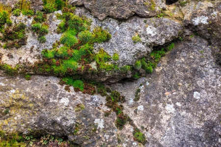 wall of sharp stones with sprouted moss