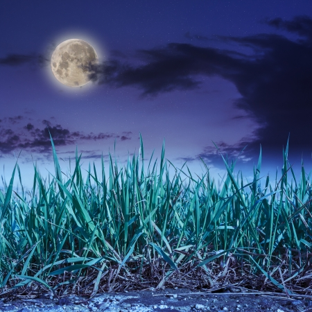 fresh green grass growing out of stone on a night sky background
