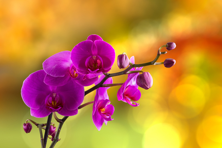 purple orchid flower close up on blurred hot orange background Stock Photo