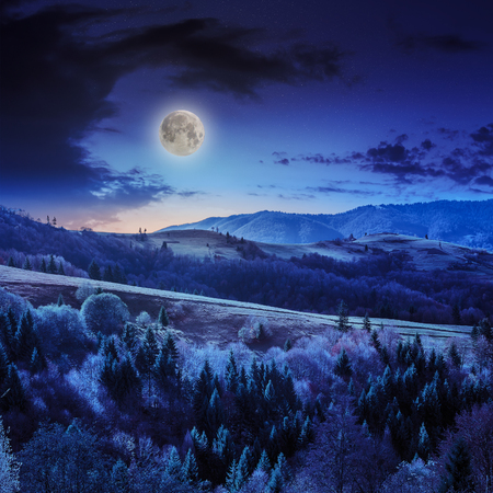 mountain steep slope with coniferous forest in moon light at midnight