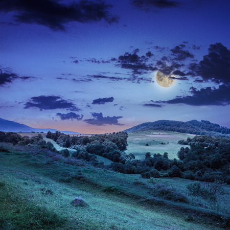 mountain steep slope with coniferous forest in moon light Stock Photo