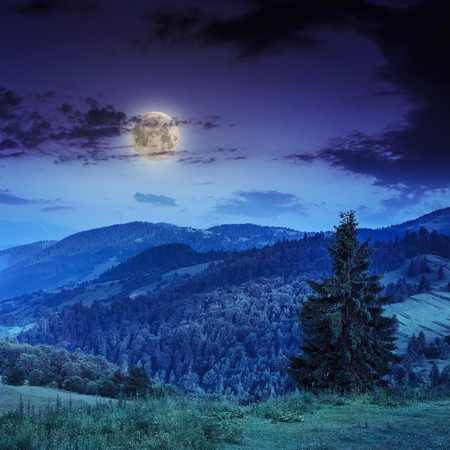 cold morning fog at deep blue night with moon in the mountains Stock Photo