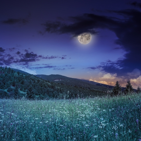 mountain summer landscape. pine trees near meadow and forest on hillside under night sky with clouds in moon light