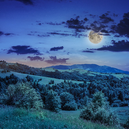 mountain summer landscape. pine trees near meadow and forest on hillside under  sky with clouds at night in moon light Stock Photo