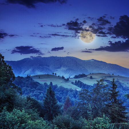 mountain steep slope with coniferous forest at night in moon light Stock Photo