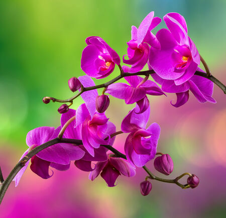 purple orchid flower close up on blurred green background Stock Photo