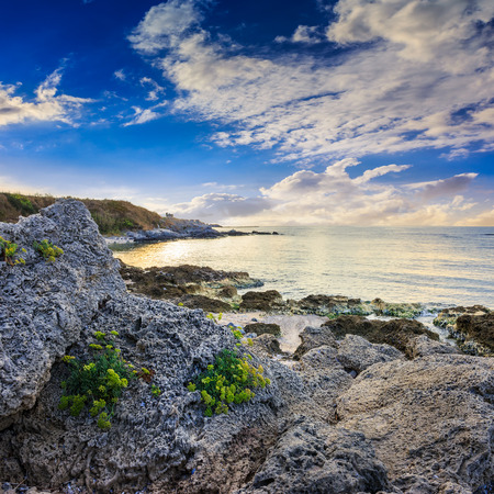 little yellow flowers grow on sandy boulders near the sea