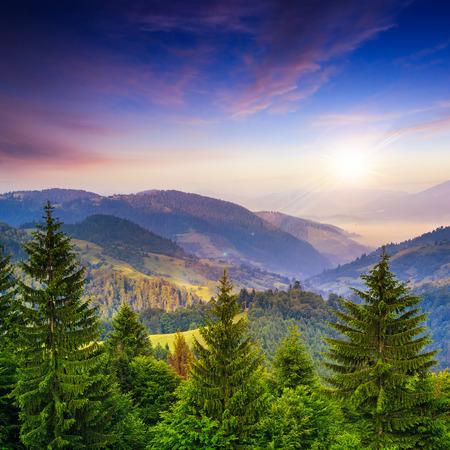 hi resolution: �rboles de pino de monta�a paisaje cerca de valle y colorido bosque en la ladera bajo el cielo azul con nubes y niebla al atardecer - volver a presentar una resoluci�n de alta
