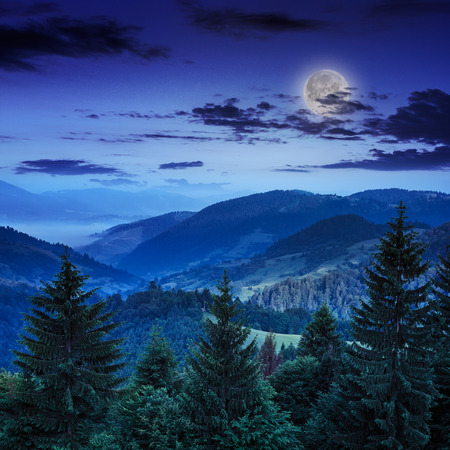 mountain landscape pine trees near valley and colorful forest on hillside under blue sky with clouds and fog in moon light at night Stock Photo