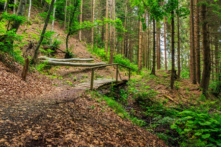 wooden bridge disappearing into the depths of forest Stock Photo
