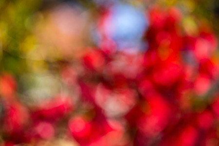 Abstract light blur through the leaves and flowers of the tree crown