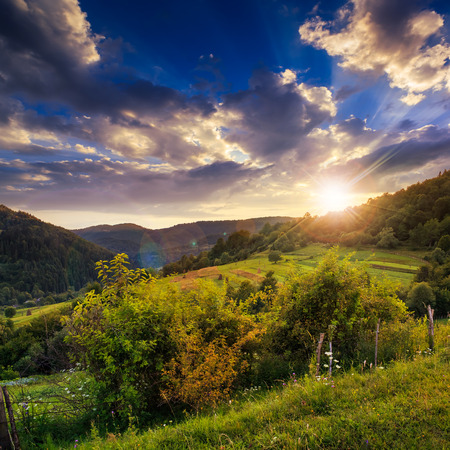 mountain summer landscape. pine trees near meadow and forest on hillside under  sky with clouds at sunset photo