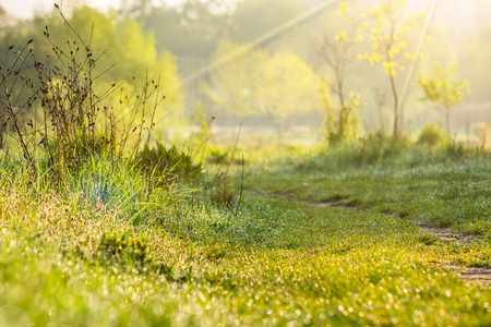forest glade with path and shiny blur of wet grass in the warm sun light